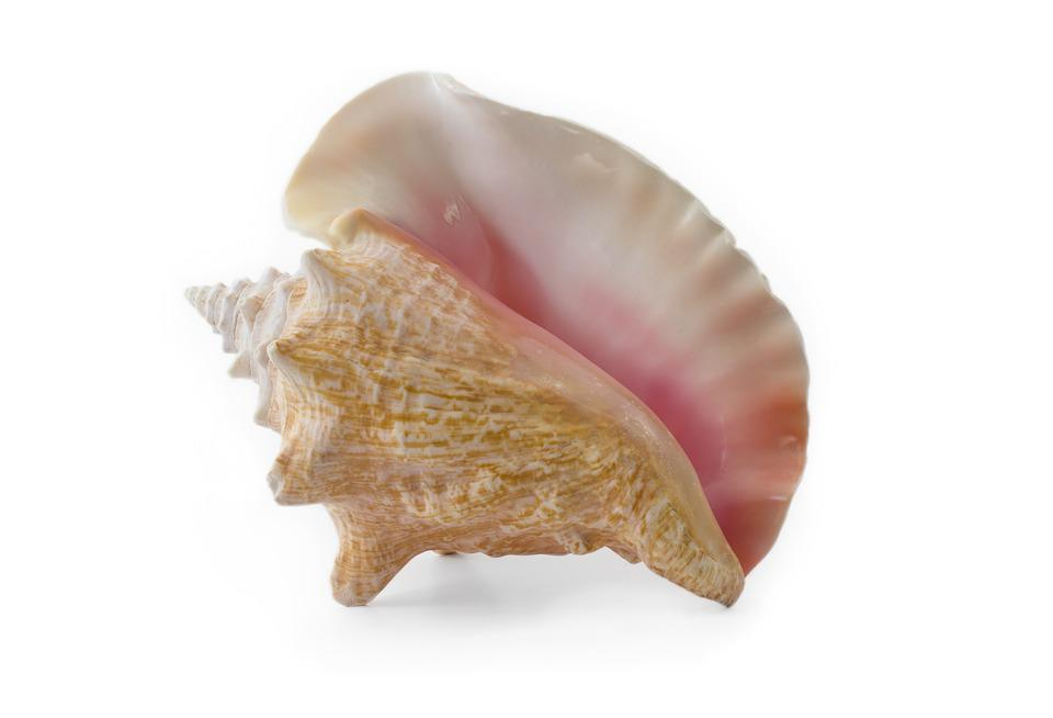 Conch, Shell, Seashell, Beach, Coastal, Vacation