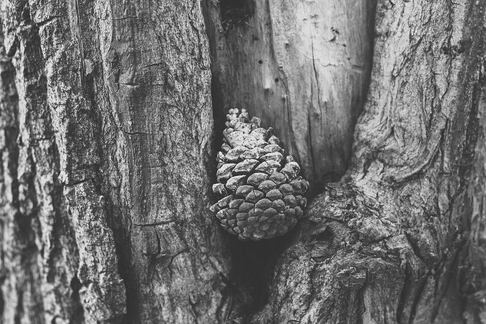 Texture, Cone, Black And White, Pinecone, Outdoor