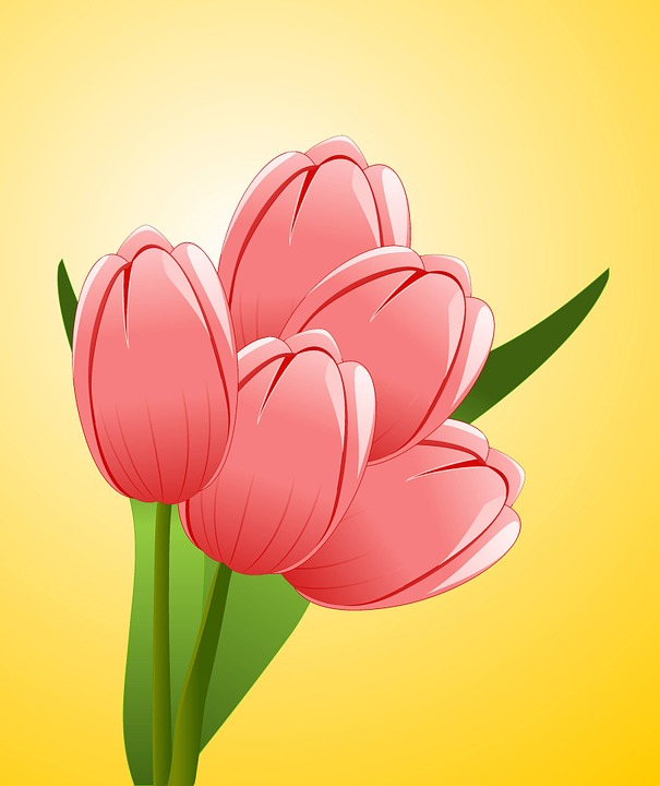 Tulips, Flowers, Bouquet, Celebration, Congratulations