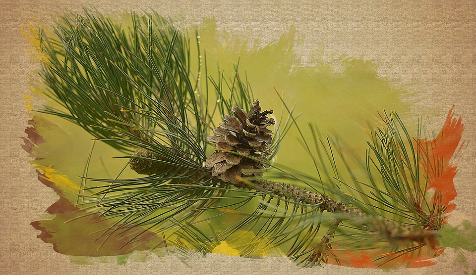 Coniferous Branch, Needles, Nature, Pine Cone, Forest