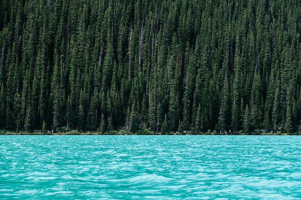 Lake, Trees, Forest, Woods, Woodlands, Conifers