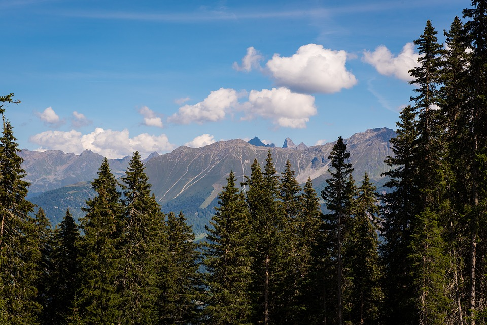 Landscape, Mountains, View, Outlook, Trees, Conifers