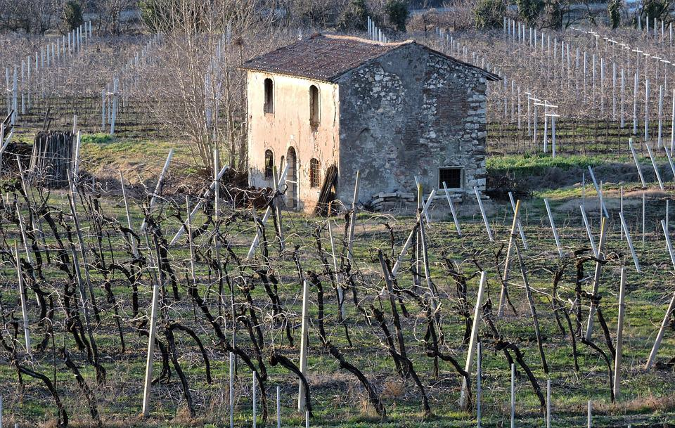 House, Old, Vineyard, Ancient, Field, Construction