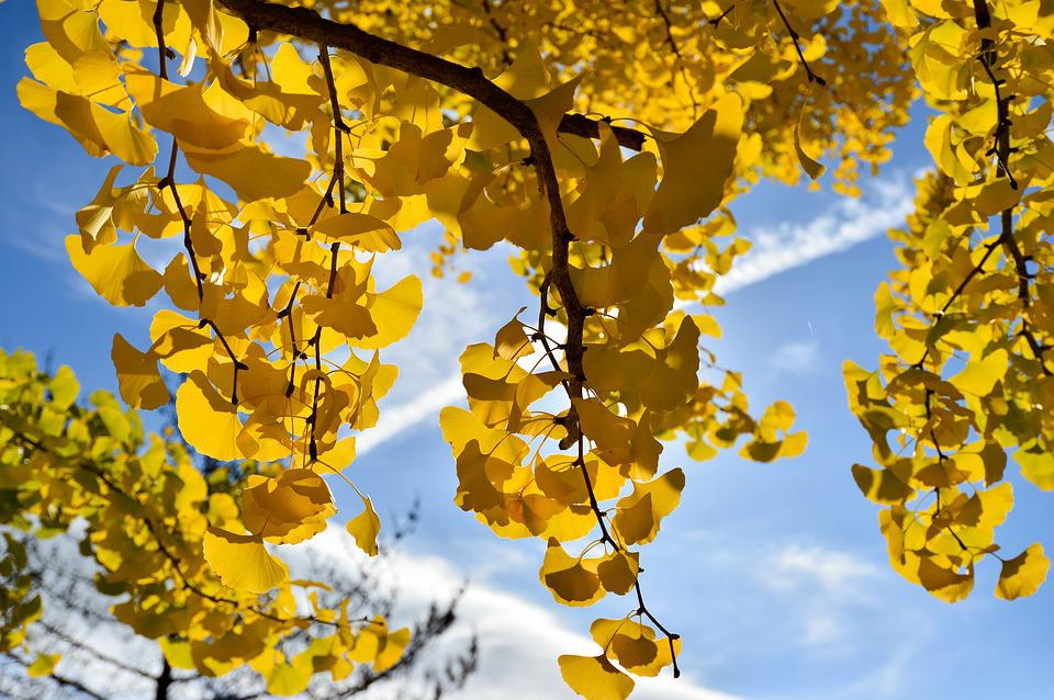 Former Master Of The Road, Ginkgo Biloba, Contrail