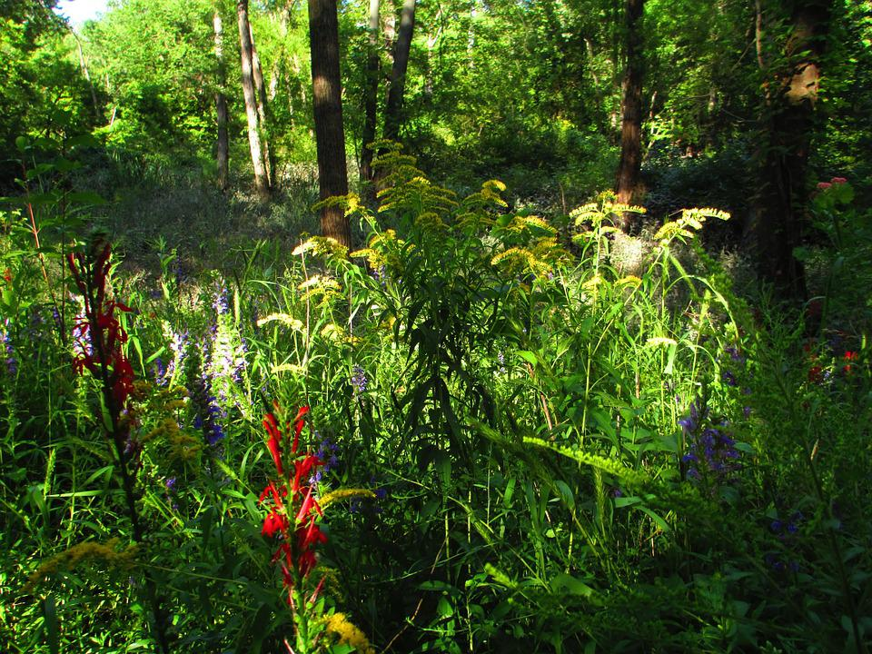 Contrast, Color, Flowers, Tall Grass, Colorful, Light
