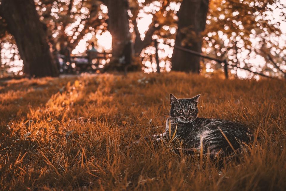 Cat, West, Sun, Grass, Orange, Tree, Light, Contrast