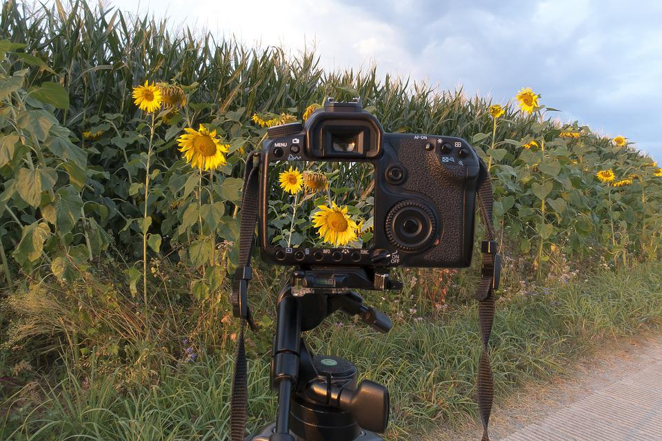 Sunflower, Camera, Control Panel, Helianthus Annuus