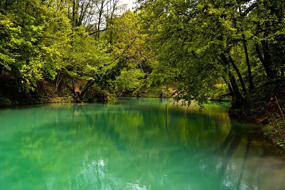 Lake, Tree, Forest, Copper, Nature, Water, Landscape