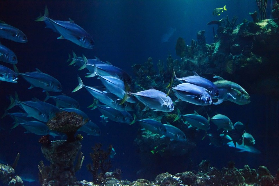 Animal, Aquarium, Aquatic, Blue, Coral, Dark, Deep