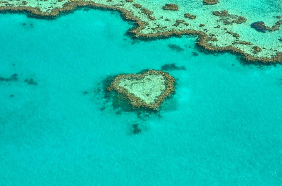 Heart, Coral, Australia, Coral Reef, Great Barrier Reef
