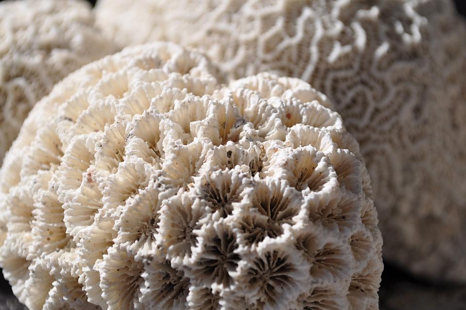 Coral, Sea, Reef, Ocean, White, Beach