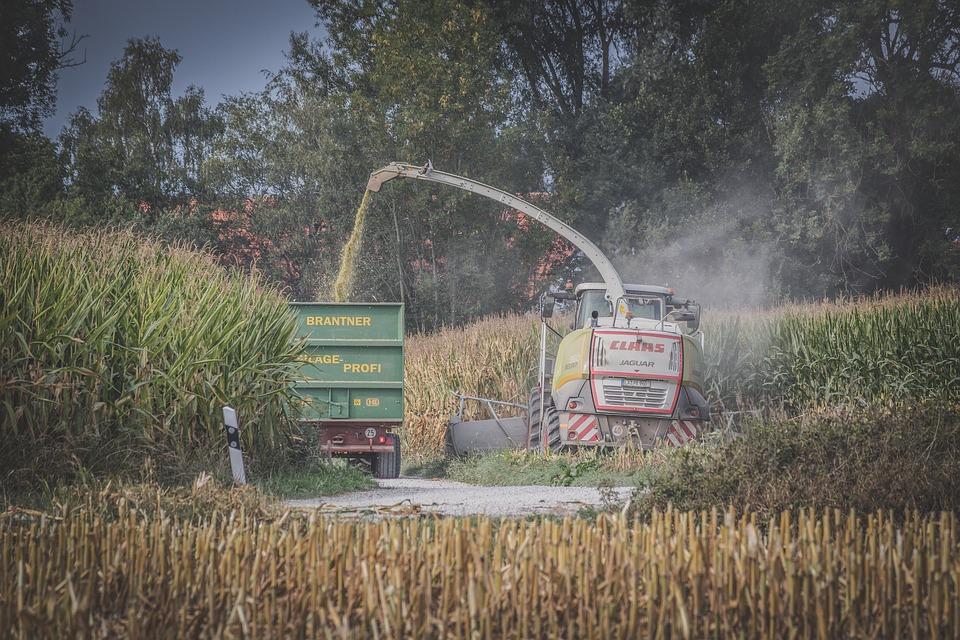 Corn Harvest, Agriculture, Harvest, Food, Field, Corn