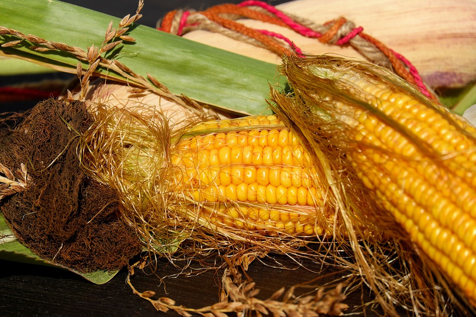 Corn On The Cob, Corn, Corn Hair, Autumn, Decoration