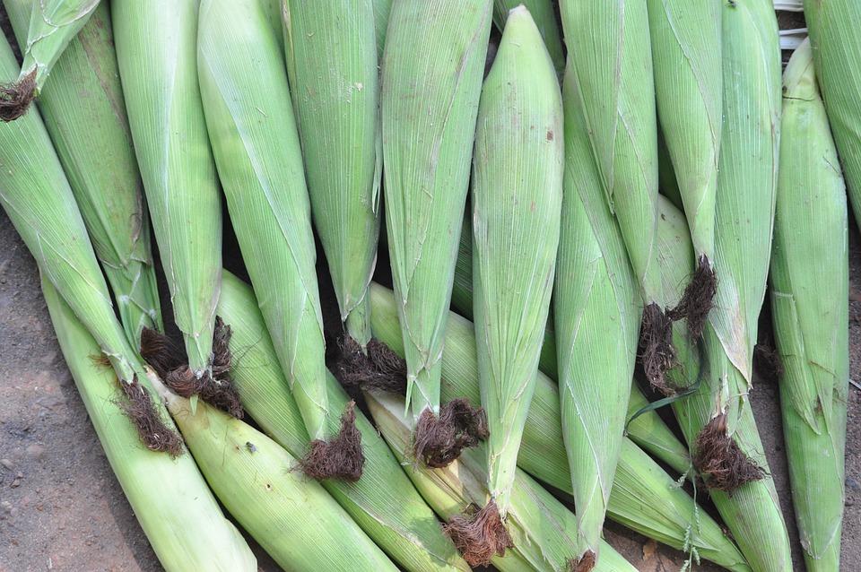 Corn, Baby Corn, Vegetable, Food, Vitamin, Healthy