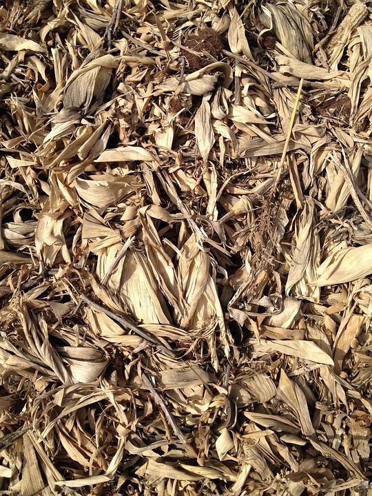 Grain, Corn Stalks, Hay