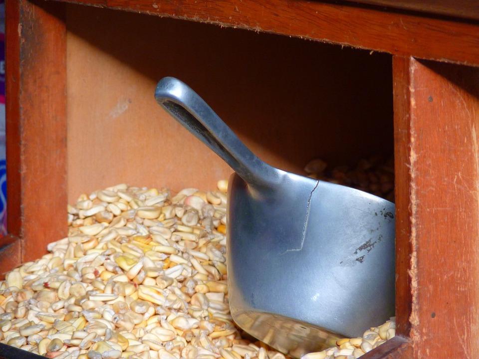 Corn, Cereals, Food, Blade, Stock