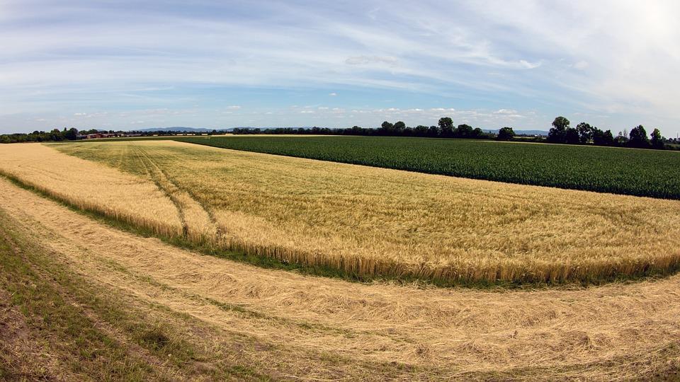 Landscape, Cereals, Cornfield, Harvest