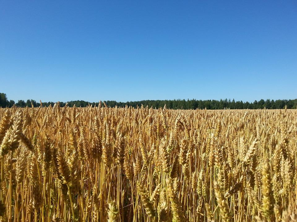 Sky, Cornfield, Blue Sky, Finnish, Landscape