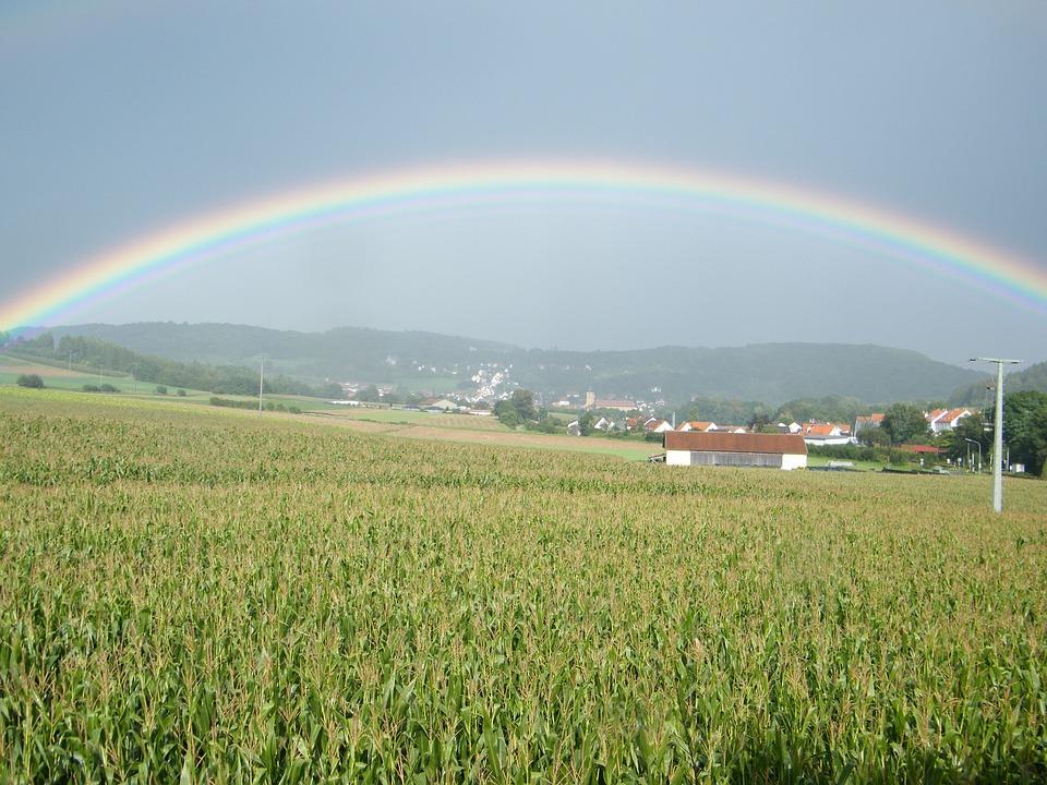 Rainbow, Cornfield, Field
