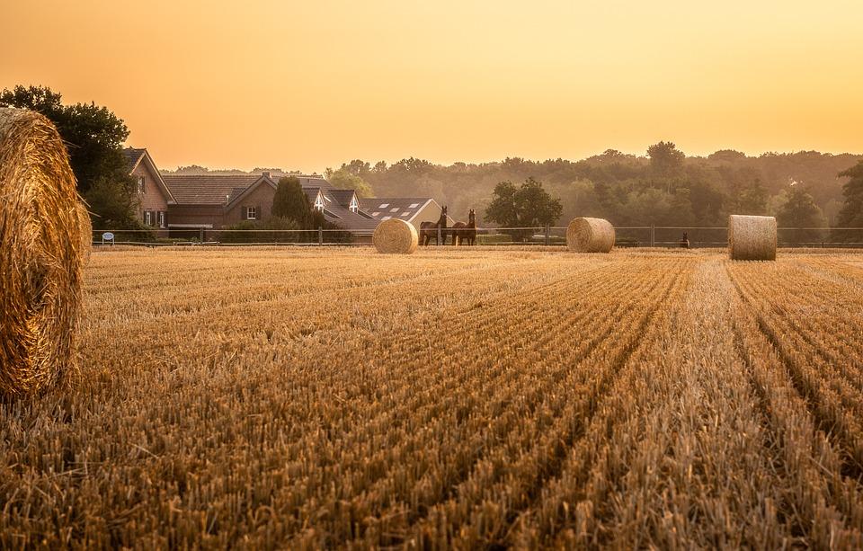 Cornfield, Sunrise, Stubble, Lighting, Sun, Harvest