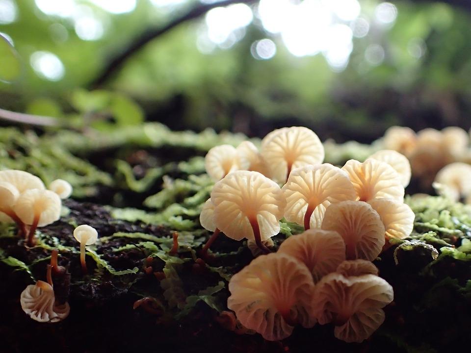 New Zealand, Coromandel Forest Park, Bush Fungi