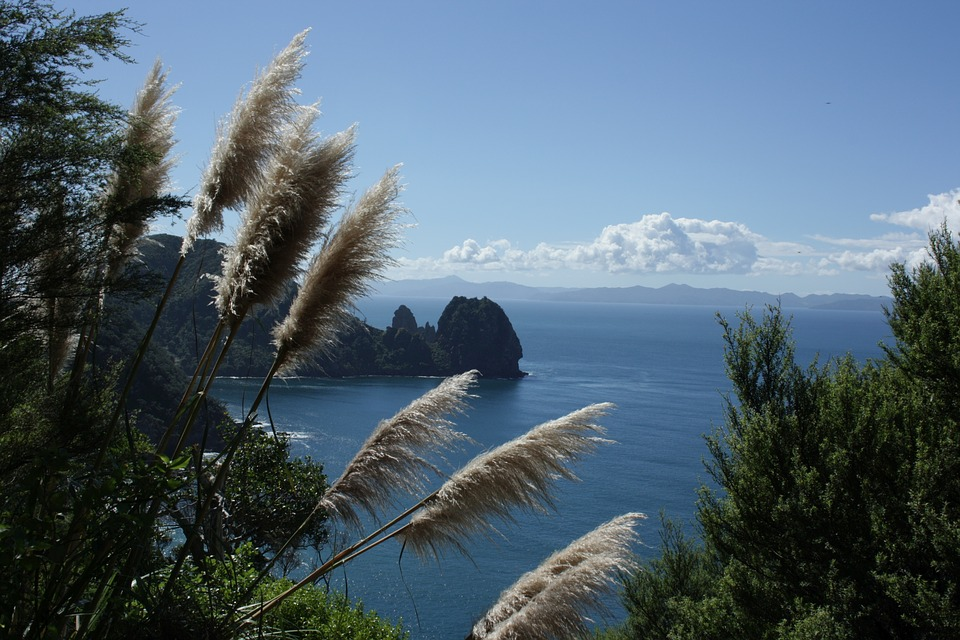 New Zealand, North Island, Coromandel, Sea, Grass