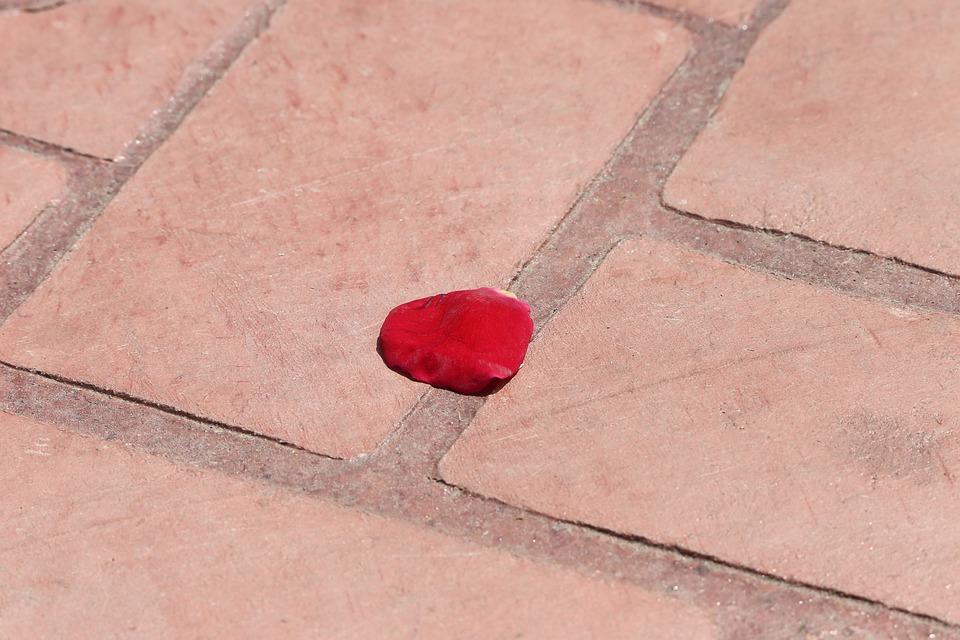 Corpus Christi Feast, Red Rose Petal On The Floor