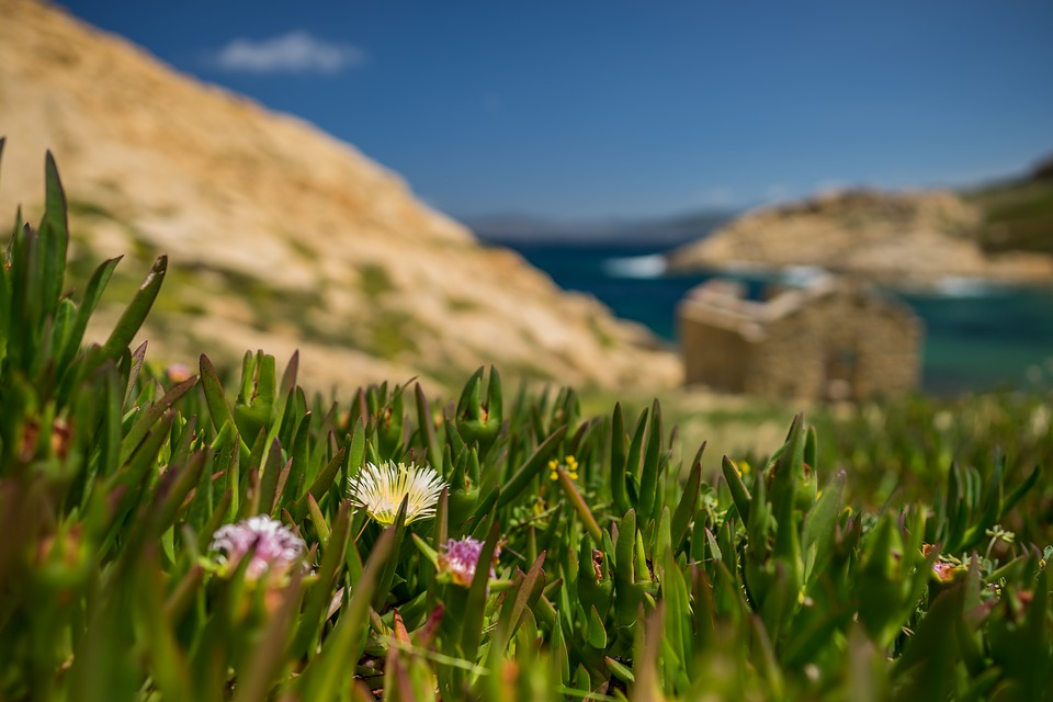 Nature, Summer, Sky, Grass, Landscape, Corsica