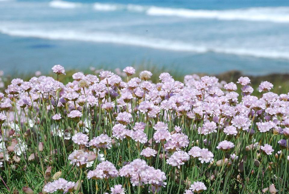 Pink Flowers Flower Spring Coastal Costa