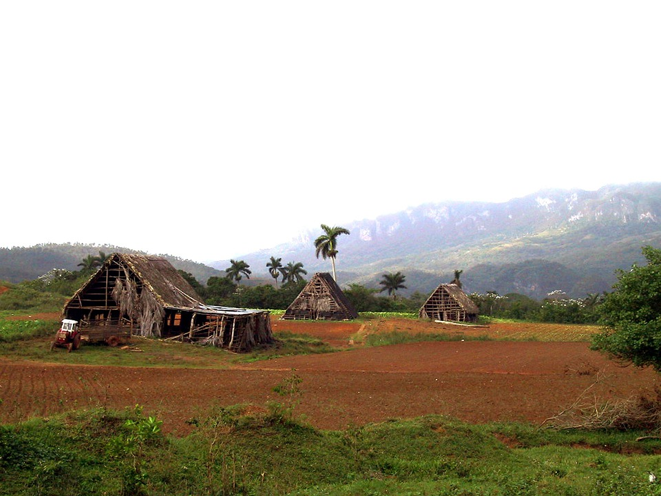 Cottages, Red Earth, Tobacco Plantation, Cuba