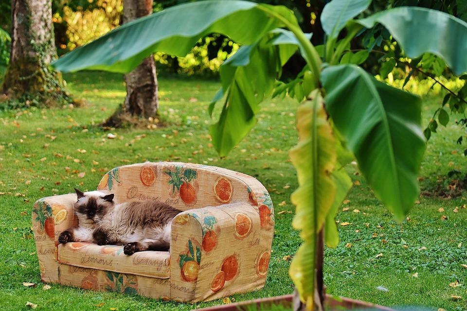 Urlaubsfeeling, Sofa, Couch, Cat, British Shorthair