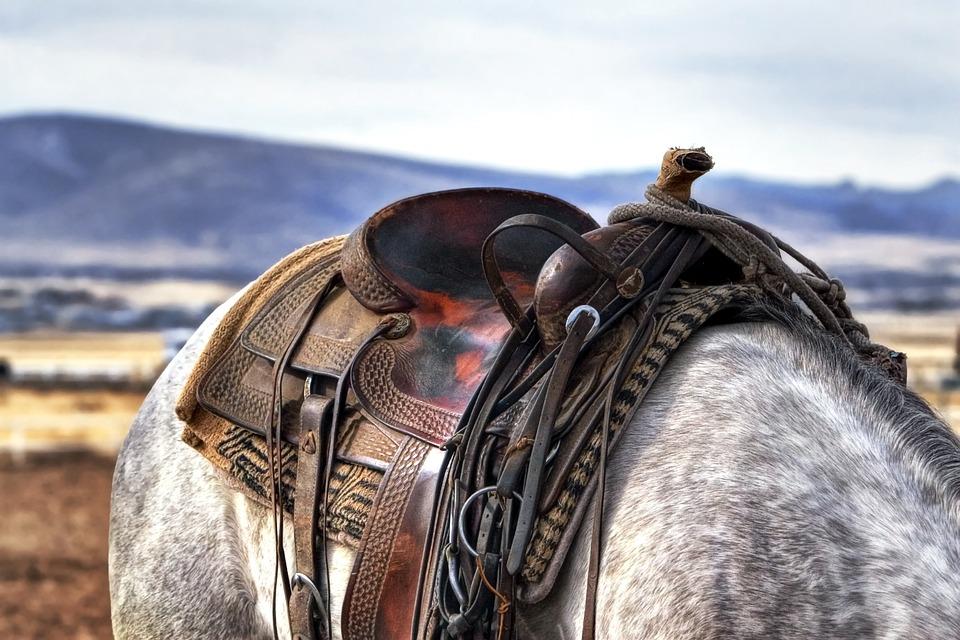 Saddle, Horse, Cowboy, Western, Country, Animal, Farm