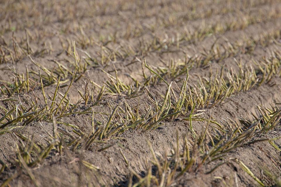 Country, Stubble, Harvest, Autumn, Field