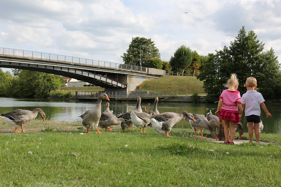 Children, Geese, Country, River