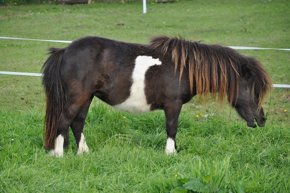 Mammal, Grass, Field, Farm, Meadow, Pony, Country Life