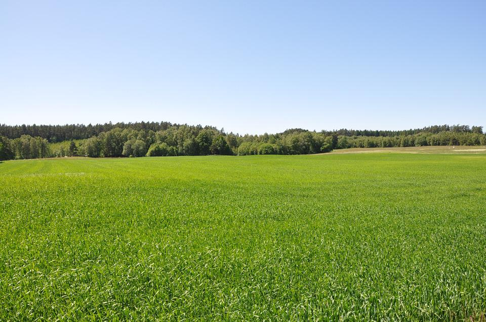 Grass, Go, Summer, Country, Bed, Green, Sky Blue