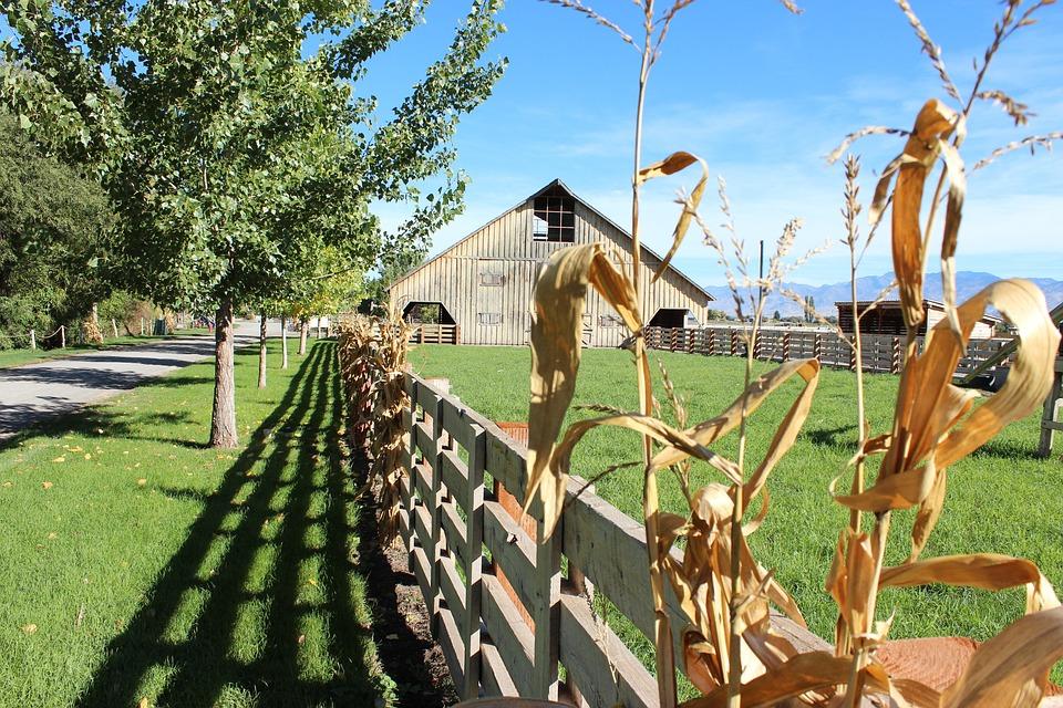 Fence, Farm, Country, Rural, Summer, Wood, Barn