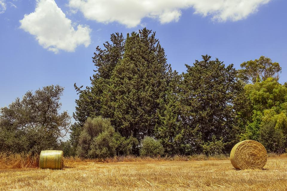 Hay, Bales, Field, Straw, Agriculture, Countryside
