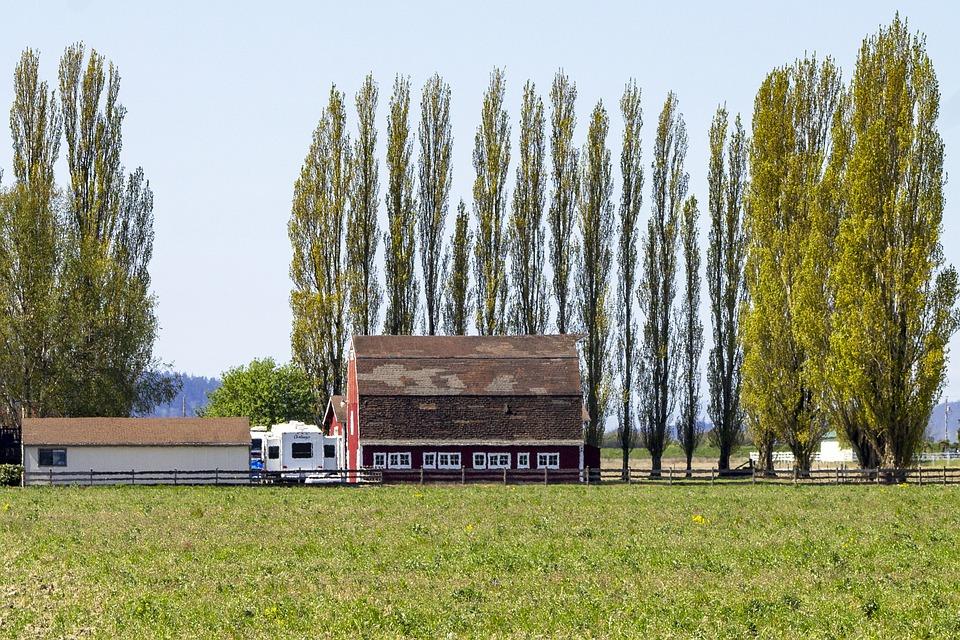 Barn, Farm, Field, Trees, Countryside, Washington State