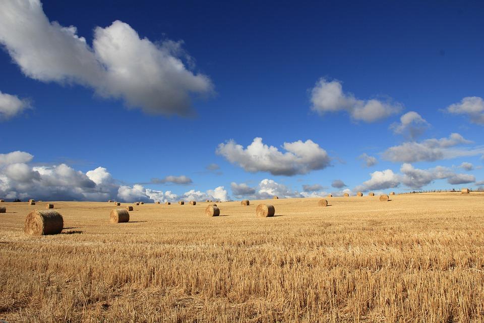 Clouds, Countryside, Crop, Farm, Farmland, Field