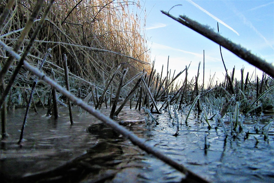 Ditch, Reed, Frozen, Countryside, Swampy, Water Plants