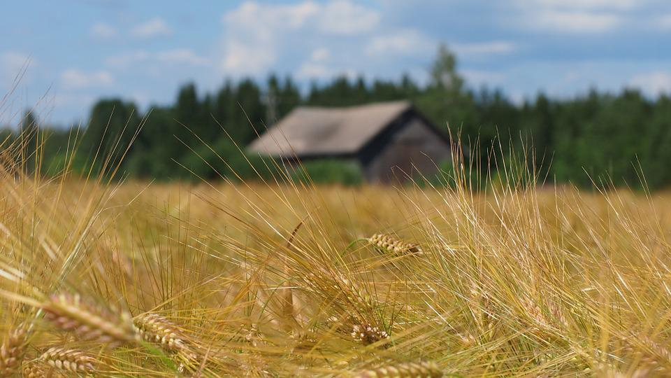 Countryside, Field, Barn, Finnish, Milieu, Landscape