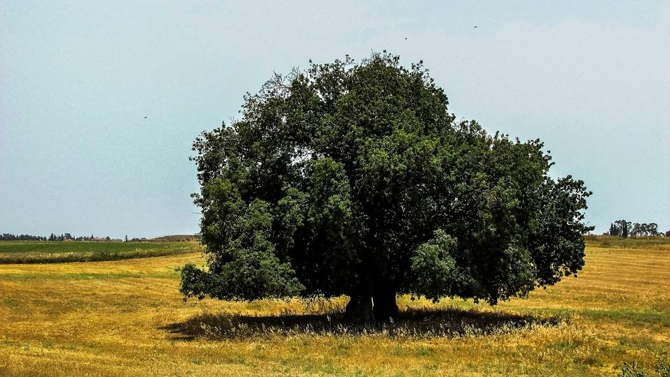Tree, Field, Landscape, Countryside, Meadow, Nature