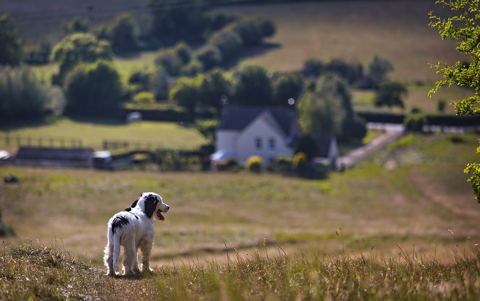 Puppy, Countryside, Reflect, Dog, Pet, Cute, Happy