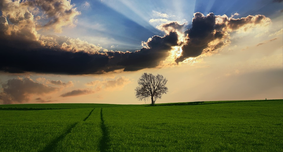 Countryside, Tree, Landscape, Sunlight, Nature, Sky