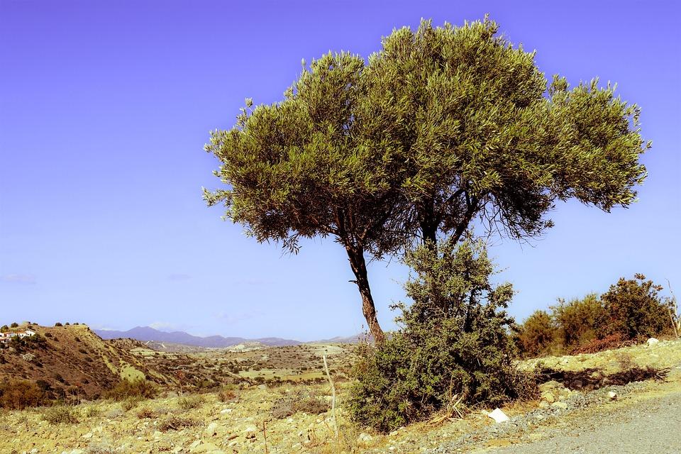 Tree, Landscape, Countryside, Scenery, Mediterranean