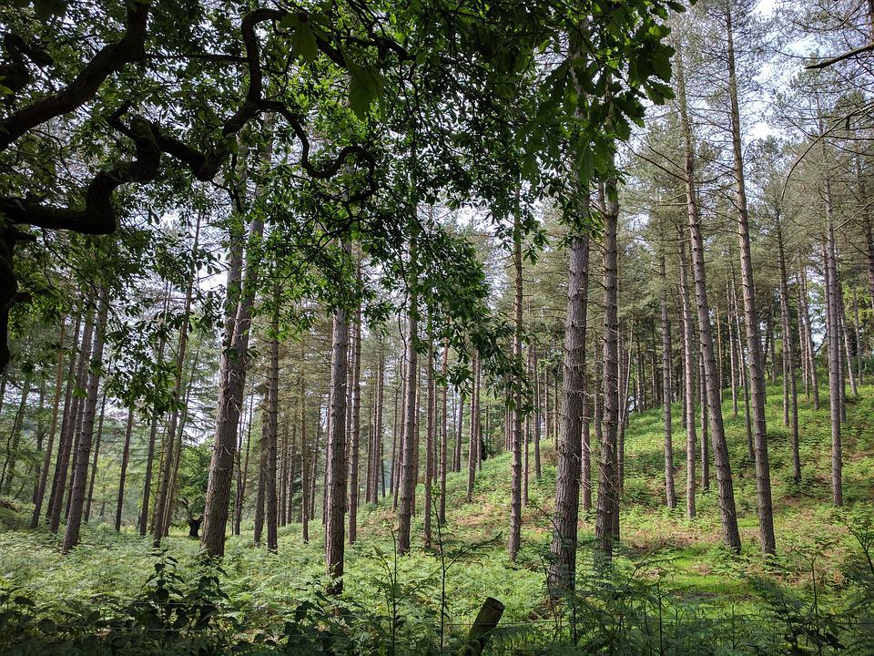 Man Cave Cannock : Free photo countryside trees cannock chase outdoor landscape max pixel