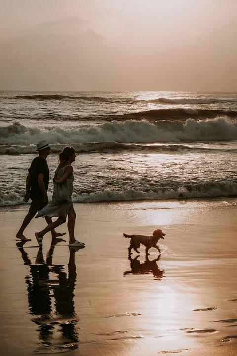 Couple, Dog, Walk, Beach, Bali, Wave, Shores, Sea