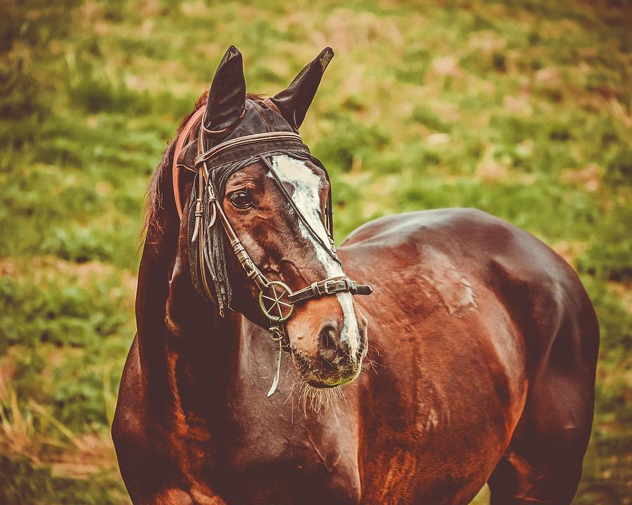 Horse, Brown, Animal, Coupling, Animal Portrait
