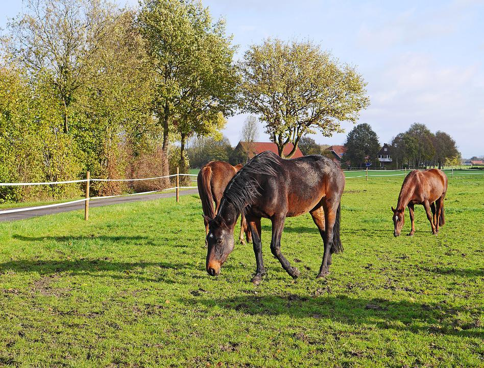Horses, Coupling, Black-brown, Farm, Meadow, Grass
